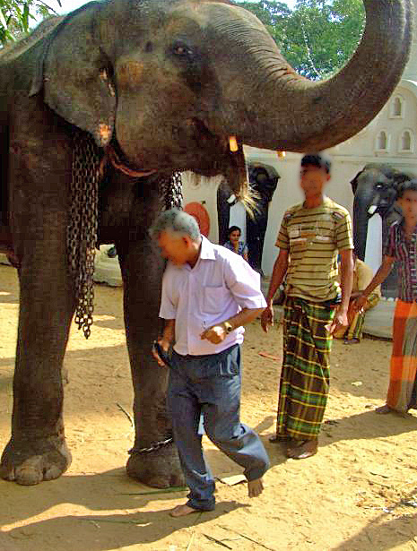 Temple authorities switch to wooden structures instead of elephants