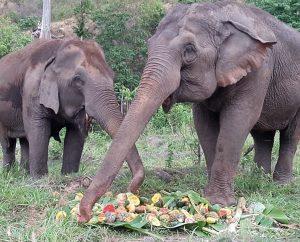BEES-elephants