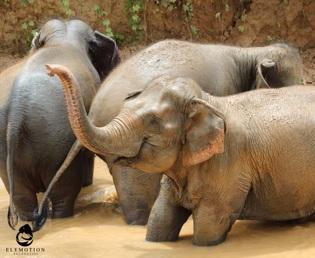 Elephant Tourism landing1