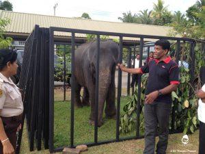 Baby elephant pen