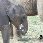 Baby Vibhishana