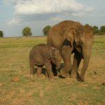 Vibhi with aloo-mother, Neela.