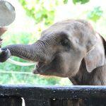 Elemotion's orphan Vibhi fills his cheeks as he drinks milk