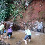 Visitors splash rescued EVP elephants.