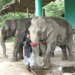Mahouts keep their sick elephants company at ENP.
