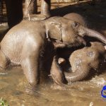 Two babies enjoy a tussle in the water.