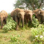 Samari (2nd right) in the wild
