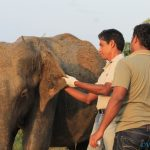 Wound treatment by Dr. Vijitha in the wild